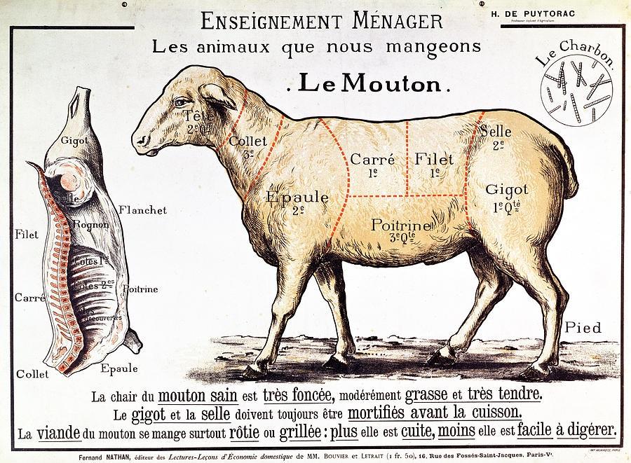 mutton french school